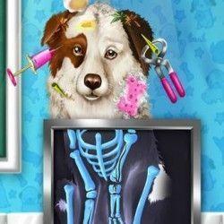 Cachorrinho no veterinário