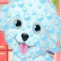 Banho no cachorrinho