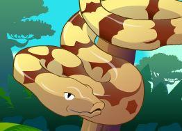 Decorar cobra do zoológico