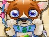 Cirurgia do cachorro