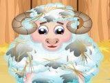 Banho da ovelha