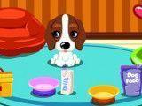 Bebê cachorro cuidados