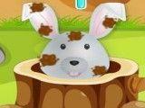 Coelho no banho