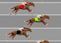 Aposta na corrida de cavalo