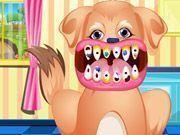 Cachorro cuidados com dentes