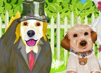 Casamento de cachorro