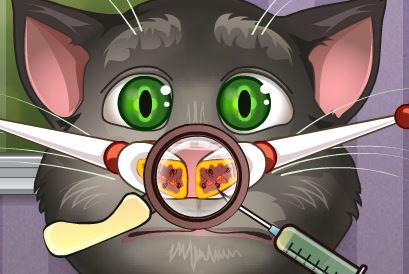 Cuidar do nariz do gato Tom