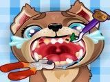 Cuidar dos dentes do cachorro
