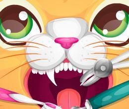 Dentes estragados do gato