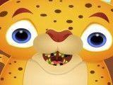 Dentes estragados do tigre