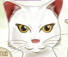 Matemática com gatos