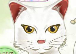 Matemática do gatinho