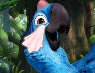 Papagaio Rio no médico