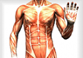 Prova de anatomia
