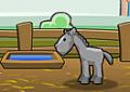 Treinar o cavalo para competições