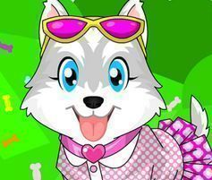 Vestir cachorro Husky